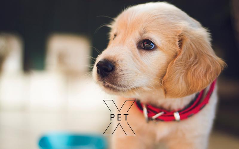 Pet X